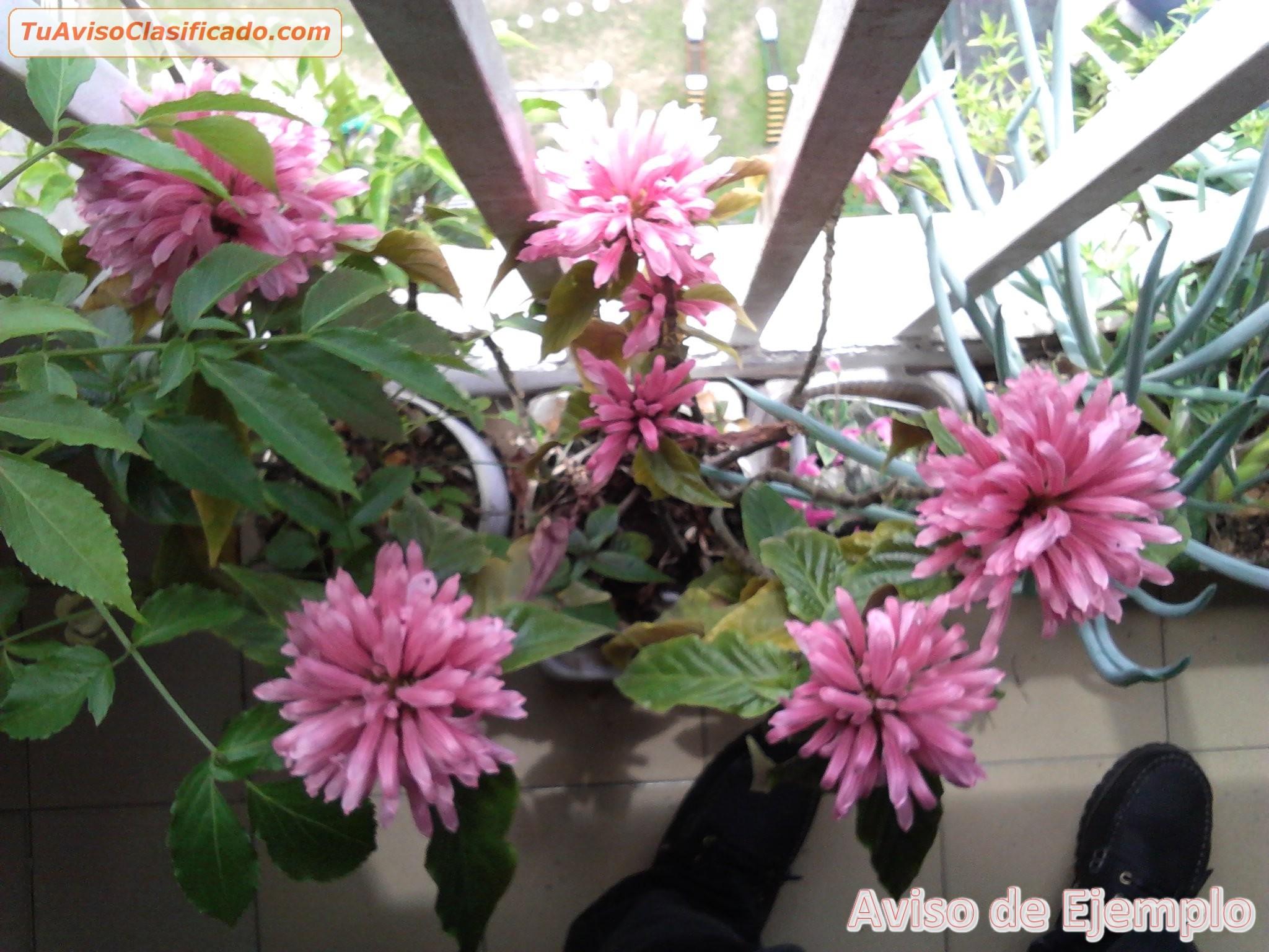 Orqu deas cultivadas en casa jard n y viveros viveros for Viveros de plantas